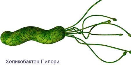 Tests d'Helicobacter Pylori